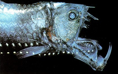 Ikan dasar laut Viperfish