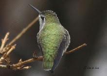 Report Rare Birds