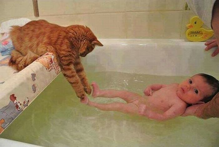 Funny cats - part 97 (40 pics + 10 gifs), cat pictures, cat playing with baby on bathtub