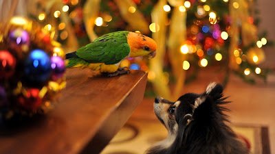 parrot with dog