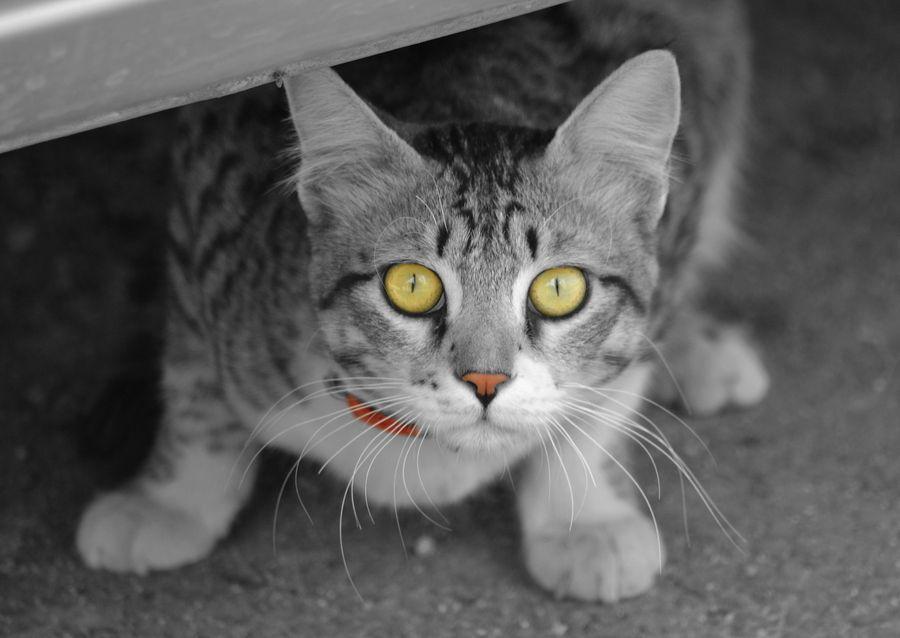 28. Pesky Feline by Arvind Ramamurthy