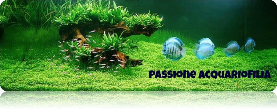 Passione acquariofilia guida elementi di arredo di un for Arredo acquario acqua dolce
