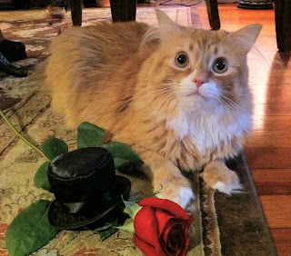 Phillip Cat ready for date night with his red rose - Stein Your Florist Co.