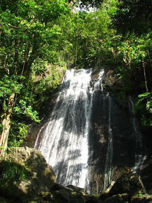(Puerto Rico) – El Yunque tropical rainforest