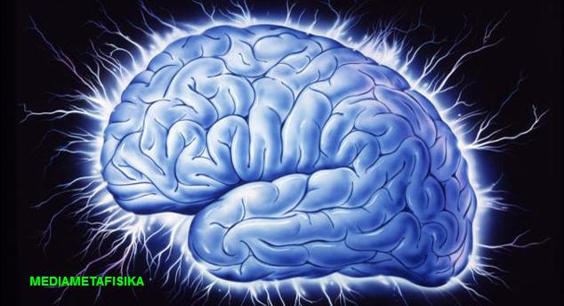 5 Fakta Mengejutkan Tentang Otak