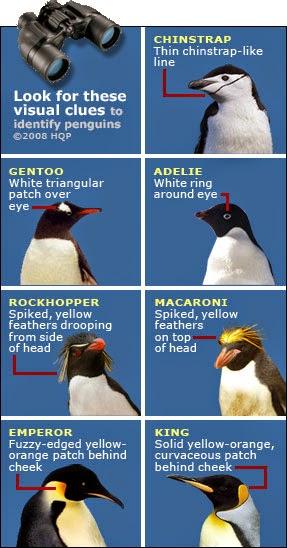 penguins facts