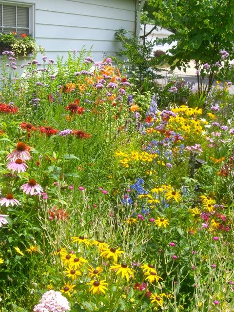 A painter 39 s garden for Wild grass landscaping
