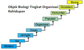 Gambar Objek Biologi Tingkat Organisasi Kehidupan