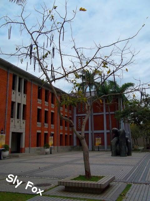 台南大學阿勃勒