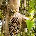 Hasil Penelitian LIPI Tentang Kandungan Sarang Semut