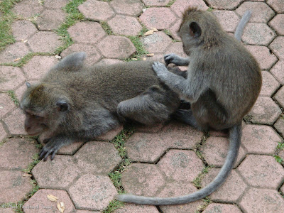 Ubud Monkey Forest Bali Photo 9