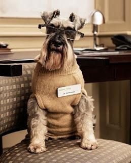 Psikiater Anjing