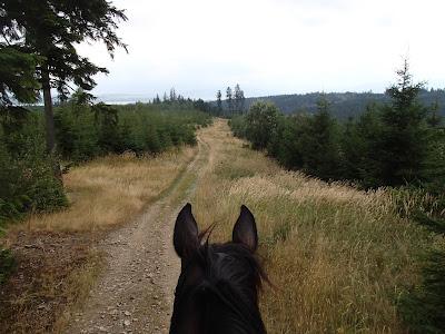 Orawa, Lipnica Wielka, Babia Góra, konie, jazda konna, jazda w terenie, trening