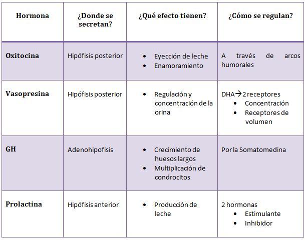 Sριcα[✭]sтαя○: Hipotalamo y sus hormonas