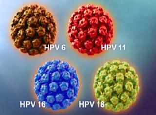 Obat HPV