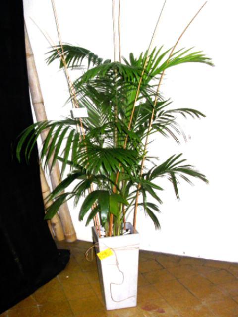 Vivero el pinar plantas para oficinas - Plantas oficina ...