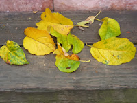 Autumn Apple Leaves