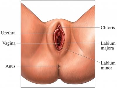 Visión externa del clítoris