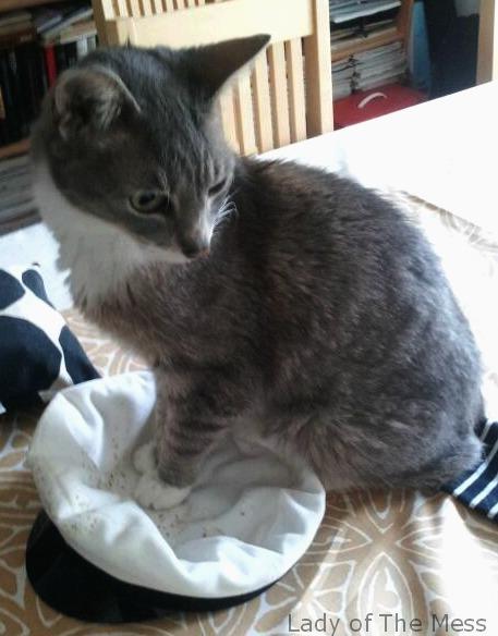 kissa, vappu