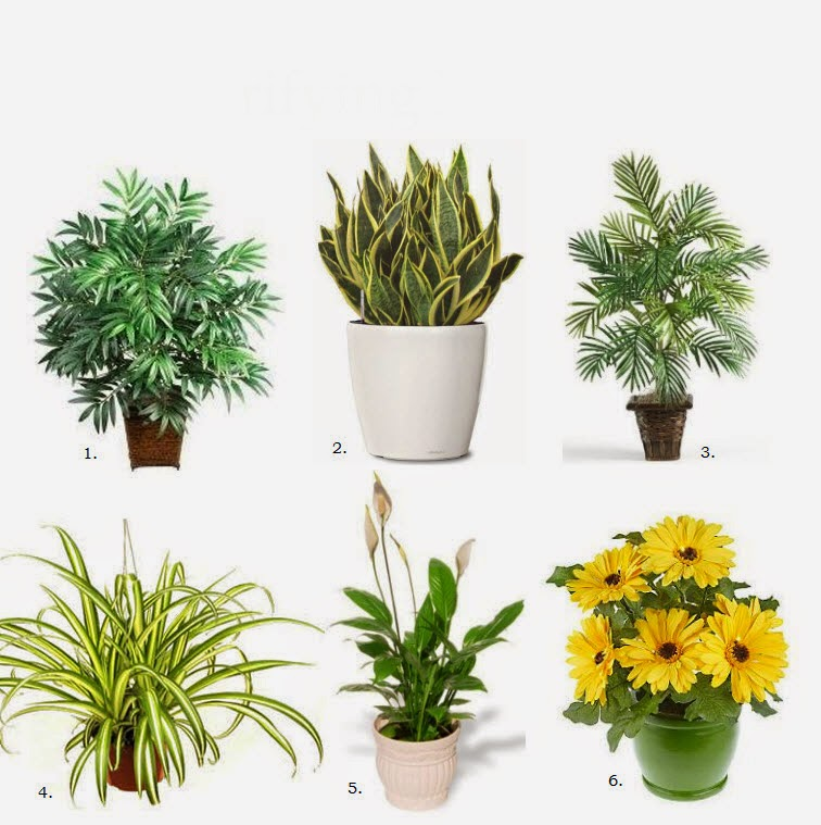 أفضل 6 نباتات منزلية لتنقية الهواء