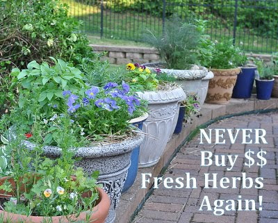 Fresh herbs are expensive to buy, simple to grow