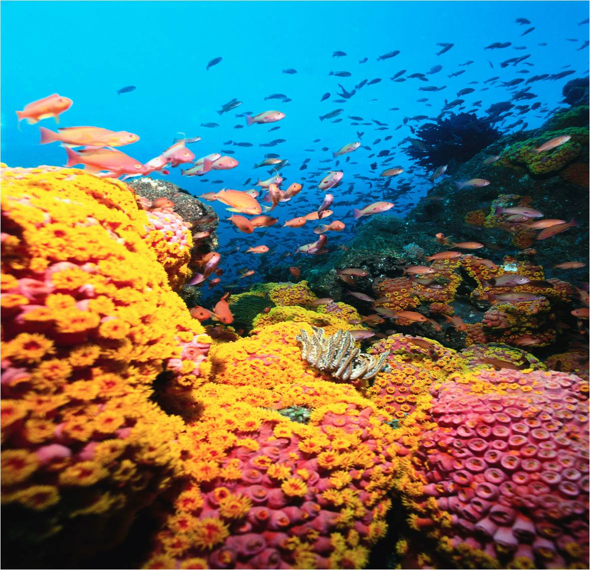 Coral Reef HD Wallpapers – wallpaper202