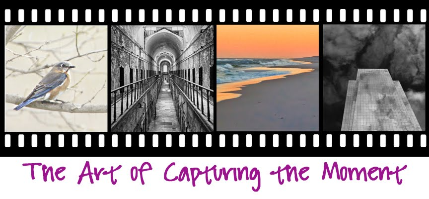 The Art of Capturing the Moment (Photo Blog)