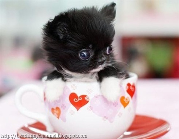Little kitten in a cup