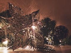 Winter - Texas