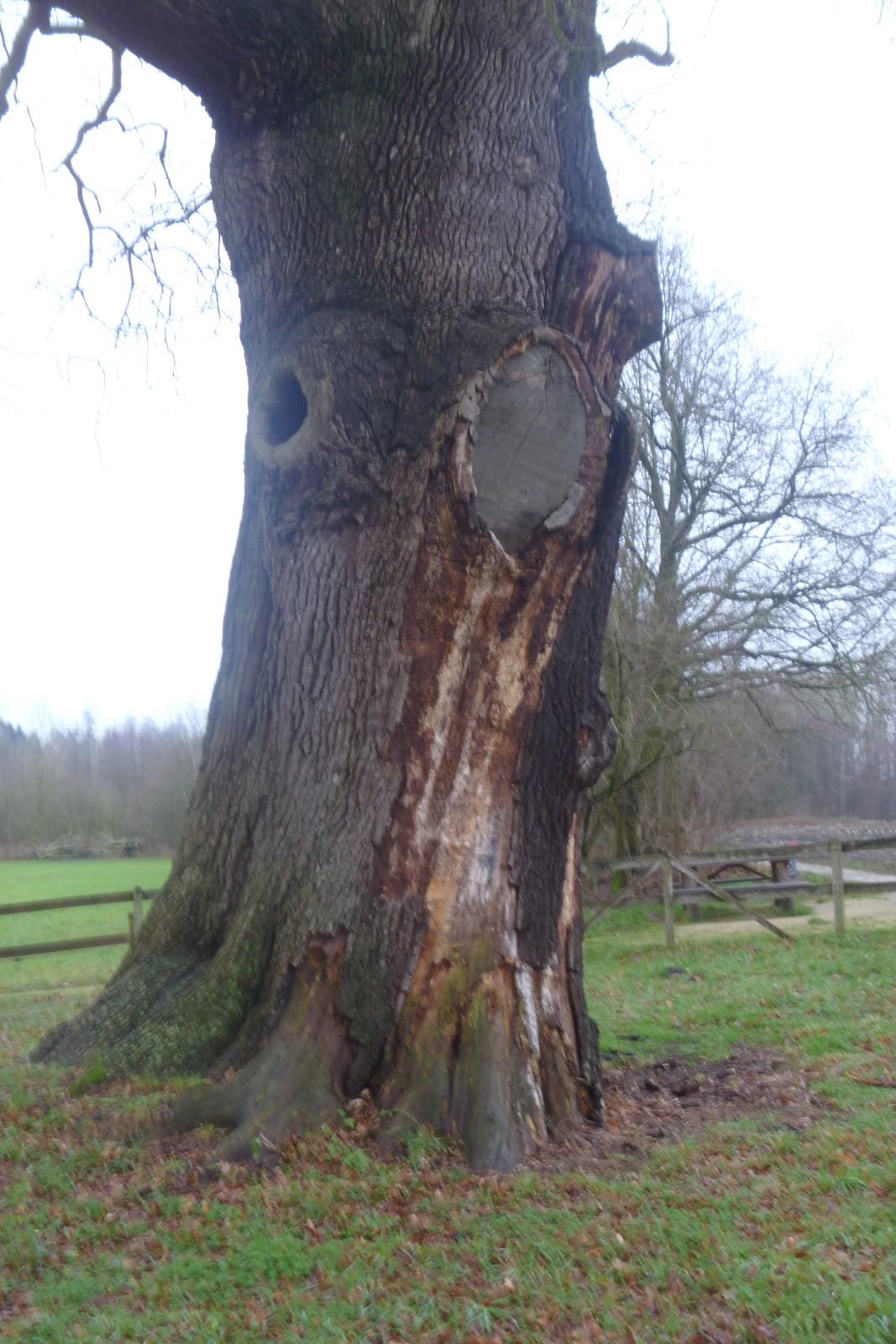 Bomenstichting Achterhoek: december 2012