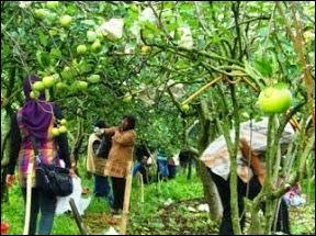 Kusuma Agrowisata Malang - Daftar Tempat Wisata untuk Liburan di Bromo