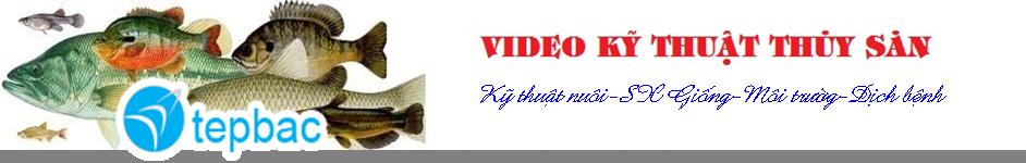 Video thủy sản/Phim thủy sản/Kỹ thuật nuôi cá/Kỹ thuật nuôi tôm