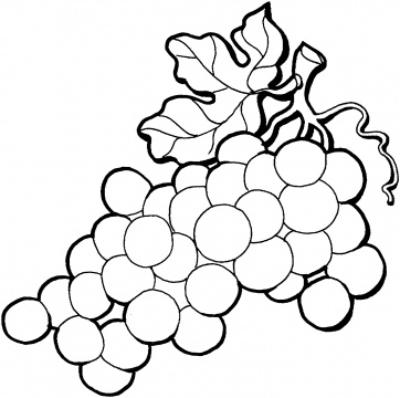 fruits coloring pages picture