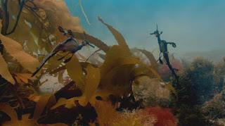 Blog Safari club, video del Pez alga