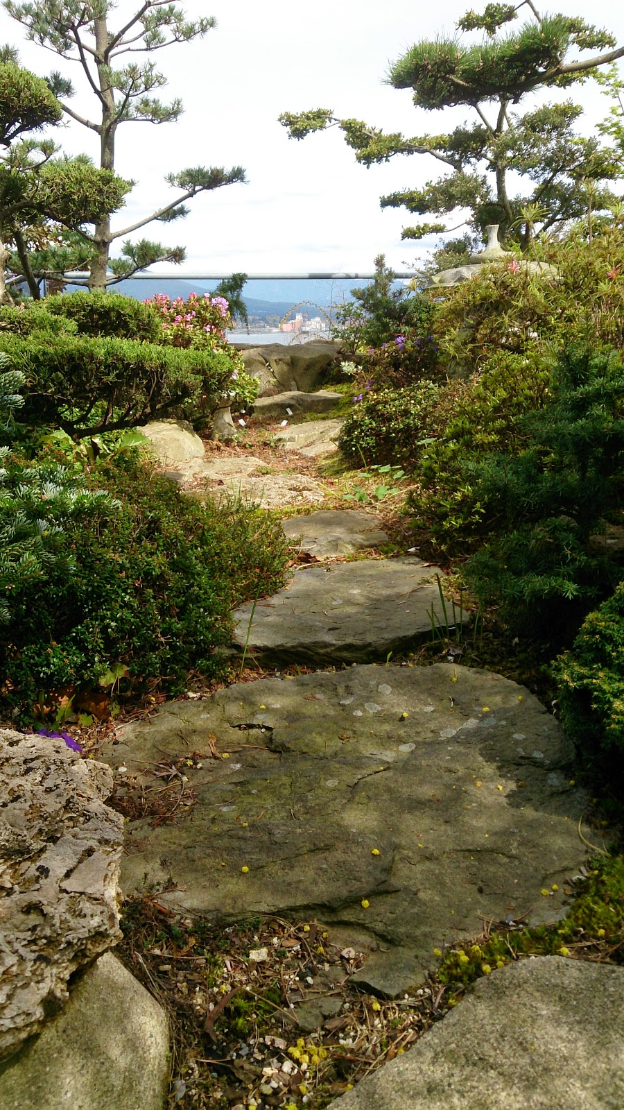 Plant Oriented: Rooftop beauty among Vancouver\'s concrete canyons