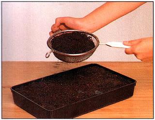 Если семена не слишком мелкие или на пакете не сказано, что их надо оставить на свету, присыпьте их сверху тонким слоем почвы