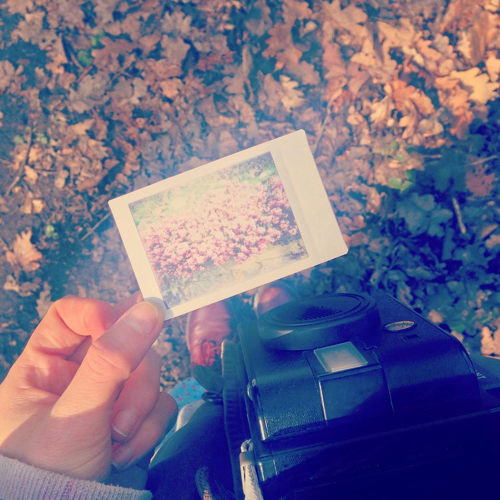 A Polaroid Image