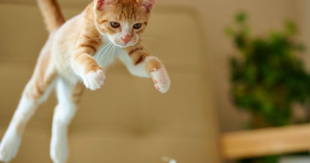 Actiefoto Met Een Springende Kat Bureaublad Achtergronden