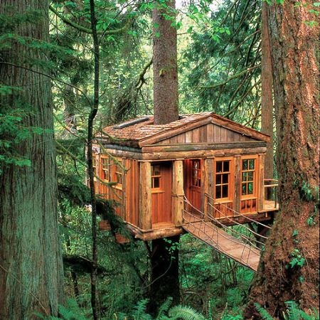 log tree house