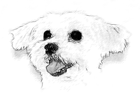 how to draw maltese dog. Black Bedroom Furniture Sets. Home Design Ideas