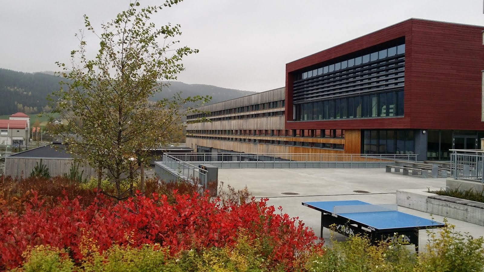 Gran bibliotek i høstfarger