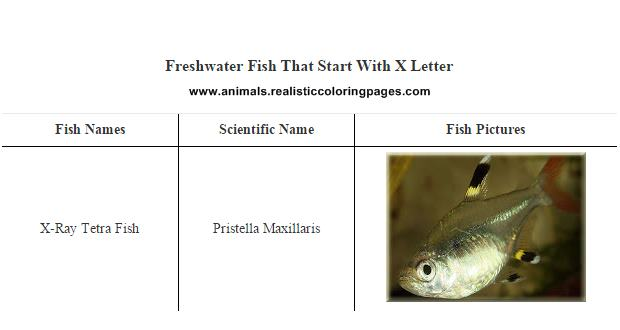 Worksheets Pictures That Start With X freshwater fish that start with x letter list of animals a to z beginning x