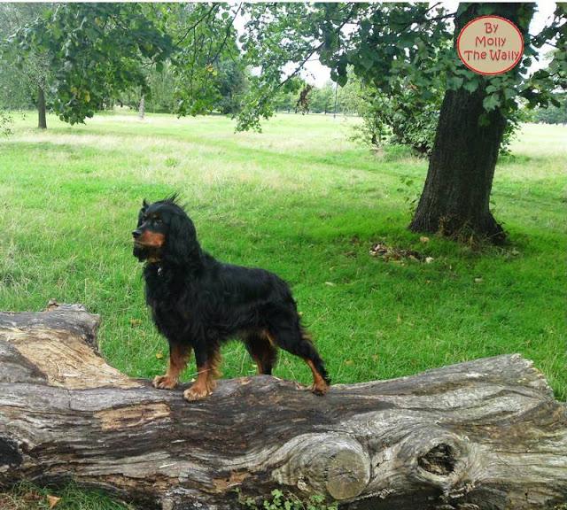 Molly The Wally, Bark From The Park!