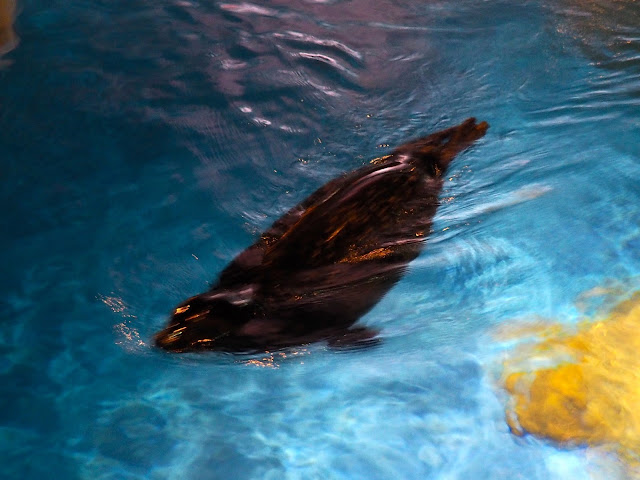 Seal in the North Pole Encounter exhibit in Ocean Park, Hong Kong