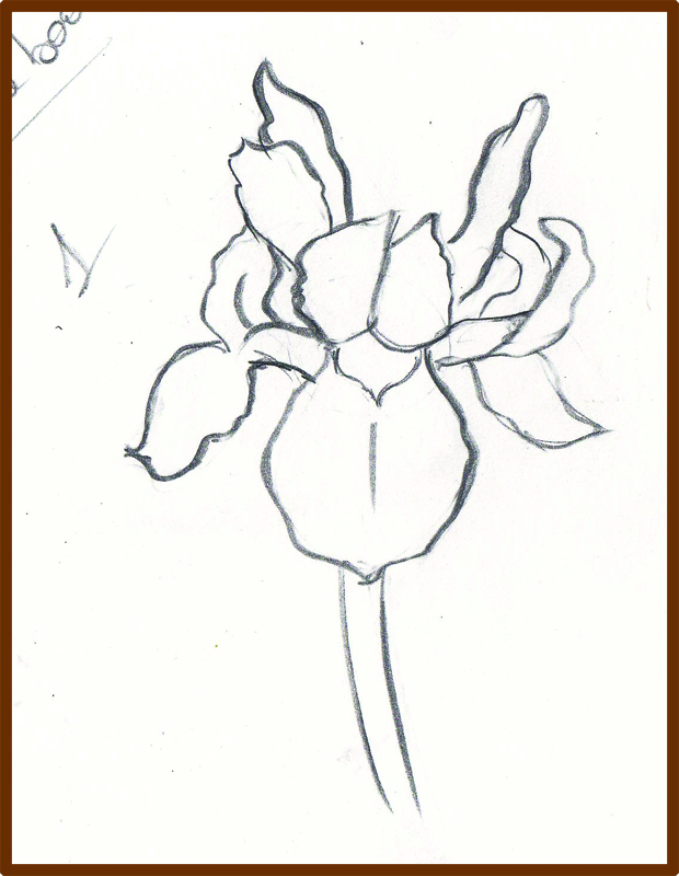 Line Drawing Of Iris Flower : Weekly doodles and tuts how to draw an iris flower