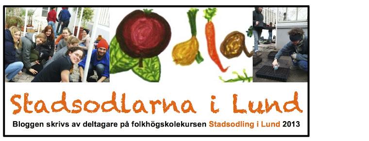 Stadsodlarna i Lund 2013
