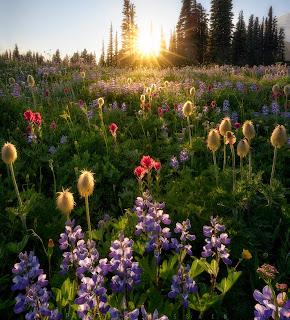 Flores de primavera al amanecer en el campo