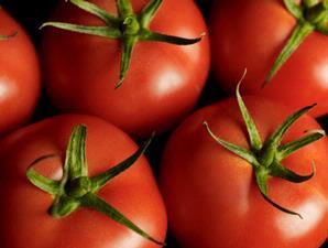 Khasiat Manfaat Tomat Untuk Kesehatan