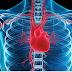 Fisioterapia Cardiovascular e suas duas frentes