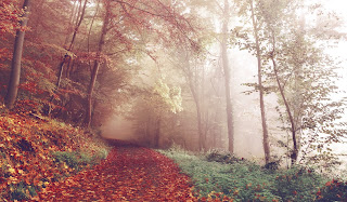 Foggy wooded path in the fall
